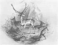 BIG GAME STAG DEER BUCK RACK ANTLERS & Doe ELK ~ Old 1876 Art Print Engraving