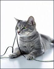 METAL MAGNET Tabby Cat Green Eyes Knit Crochet Yarn Cats MAGNET
