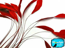 1 Dozen - RED Stripped Coque Tail Feathers