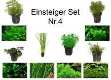 débutant Set mit 6 Simple TROPICA Pot de plantes aquariumpflanzenset nr.4