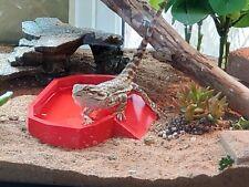 Reptile (Bearded Dragon) Water Dish