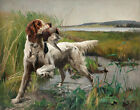 Karl Uchermann English Setter With Game In His Mouth Canvas Print 16 x 20 #3506