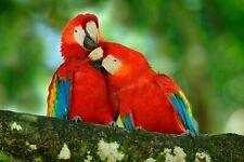 VLIES Fototapete-PAPAGEIEN-(2952ah)-Natur Vogel Tierbild Wandbild Dekoration