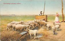 bc65474 Hortobagyi juhnyaf itatasa sheep mouton Folk Folklore Type hungary