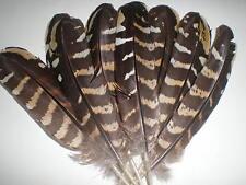 lot de 10 plumes faisan vénéré 16  cm
