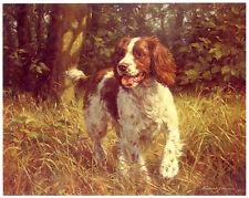 WELSH SPRINGER SPANIEL WORKING GUNDOG LIMITED EDITION PRINT  - by Fred Haycock