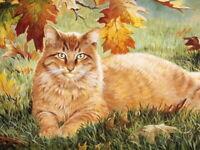 HD Print Sunbathing Cat Oil painting Art Giclee Printed on Canvas P446