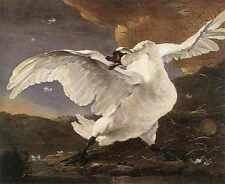 Jan Asselyn The Threatened Swan A3 Box Canvas