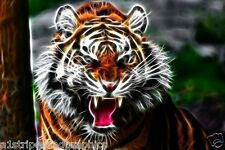 TIGER #4 RV Trailer or Wall Mural FULL COLOR Decal Decals Graphics Sticker Art