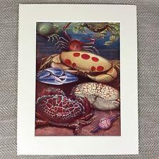 Vintage Art Deco Print Crabs Sea Life Ocean Marine Creatures Ca. 1930s