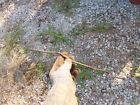 Allis Chalmers WD WD45 Tractor  gas fuel line from tank to carburetor