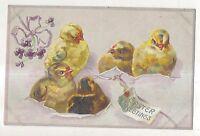 Easter greetings, Five cute Baby Chicks, Vintage Raphael Tuck Postcard