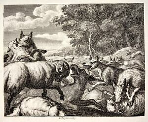 1780 c. L. Chapmann sclp - The Wolves & the Sheep - copper engraving - Fable