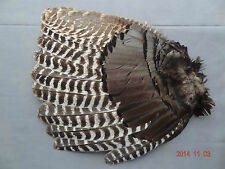 "WILD TURKEY FEATHERS SECONDARY ""RIGHT"" WING GOBBLER FAN"