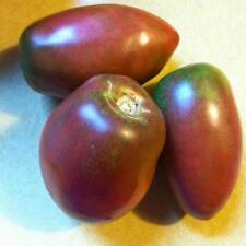 TOMATO Purple Russian Organic Heirloom Seeds (V 403)