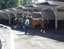 BEHOLDER 8 by 10 PHOTO 2014 Ogden Phipps Horse Race BELMONT PARK Breeders Cup #6
