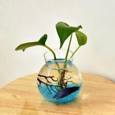 Fish Bowl Style Clear Glass Flower Vase Hydroponic Planter Terrarium Decor