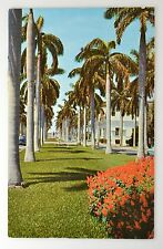 FLORIDA USA ~VINTAGE POSTCARD~ AVENUE OF MAGNIFICENT ROYAL PALMS SOUTH FLORIDA