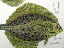 1790 FOLIO Bonnaterre FLARFISH SOLE LIMANDE hand colored Engraving