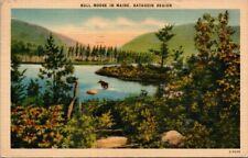 Postcard  Bull Moose In Maine Katahdin Region