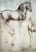 Leonardo da Vinci Framed Print - Horse Drawing (Vintage Antique Picture Artwork)