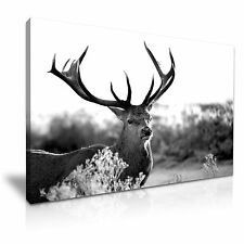 Deer Stag Animals Black and White Canvas Wall Art Picture Print 76x50cm