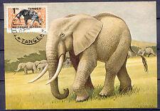 Tiere, Animals, Elefanten - Tanger - 1 Maximum Card 1956