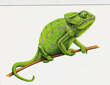 VERY RARE Chameleon on the stick by IM Russian modern postcard