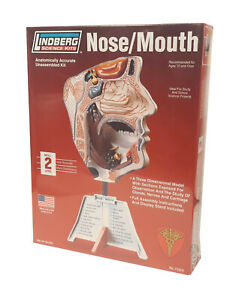 Lindberg Nose and Mouth Lifesize Model Kit #71310 New in Box