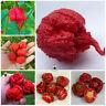 Fresh Carolina Reaper Seeds Plants Chilli Pepper Bonsais Super Chili Red 100pcs