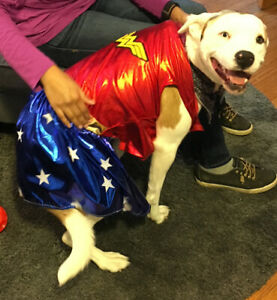 Wonder Woman Dog Costume Pet Superhero Outfit XL from Rubies (Dog not included)