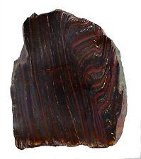 9.2 INS 4300 GRAMS STROMATOLITE  BANDED TIGER IRON SLICE  FOSSIL AUSTRALIA 3
