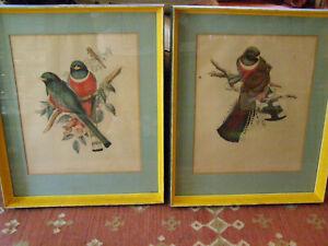 J GOULD Antique Lithograph hand colored Birds Trogon Elegans & Trogon Mexicanus