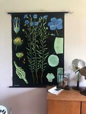 Vintage FLAX school chart JUNG KOCH QUENTELL botanical poster BOTANICAL flower