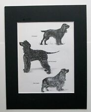 Spaniels Dog Print Gladys Emerson Cook Field Irish Sussex Bookplate 1962 Matted