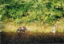 Canadian Bear FOUND PHOTOGRAPH Color CANADA Original Snapshot VINTAGE 98 17 P