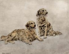 More details for golden retriever dog art limited edition print engraving - by henry wilkinson