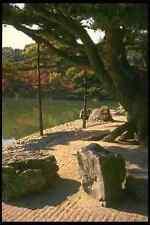 334085 TAKAMATSU ritsurin PARK ALBERO GRANDE a terra con rocce A4 FOTO STAMPA