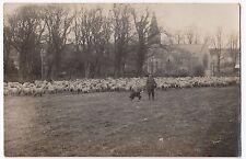 Social History, Shepherd & Dog in Front of Flock RP PPC Believed Dorset Area