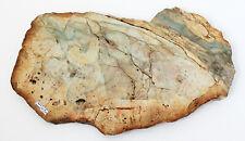 Neues AngebotFossil Holz Versteinertes Scheibe Blau 46 CM X 25 X 2 Gewicht 4.7 KG Sumatra