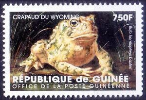 Guinea 1998 MNH, Frogs, Wyoming toad extremely rare amphibian