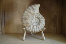 From the Earth Sea Fossil Ammonite with Stand Nautical Nautilus