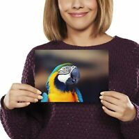 A5 - Blue & Yellow Macaw Parrot Bird Print 21x14.8cm 280gsm #12744
