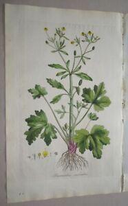 Ranunculus Crowfoot Curtis Flora Londinensis - col. copper engraving botany 1777