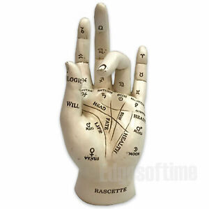 PALM PALMISTRY CHRIOMANCY FORTUNE TELLING HAND FIGURINE ORNAMENT 17.5CM