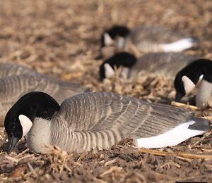 Dozen Avery Greenhead Gear Pro Grade Honker Shells Canada Goose Decoys Harvester