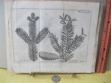 Vintage Print,FIR TREE,Spectacle de la Nature,1736,Plate 11