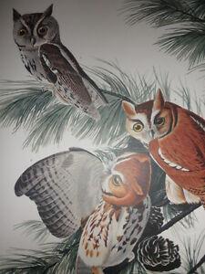 "*REDUCED* ""Little Screech Owl""; from 'THE AUDUBON FOLIO' - quality 14""x17"" print"