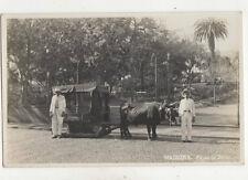Madeira Carro De Bois Vintage RPPC Postcard US021