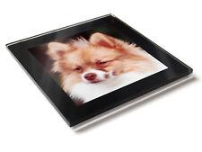GERMAN SPITZ KLEIN Dog Puppy Premium Glass Table Coaster with Gift Box